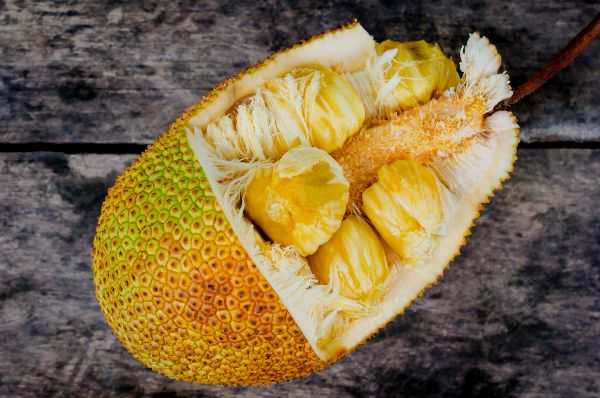 Jackfruit is an unusual fruit grown in tropical areas of the world indian superfoods kathal